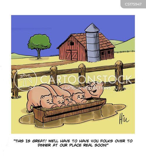 hog cartoon