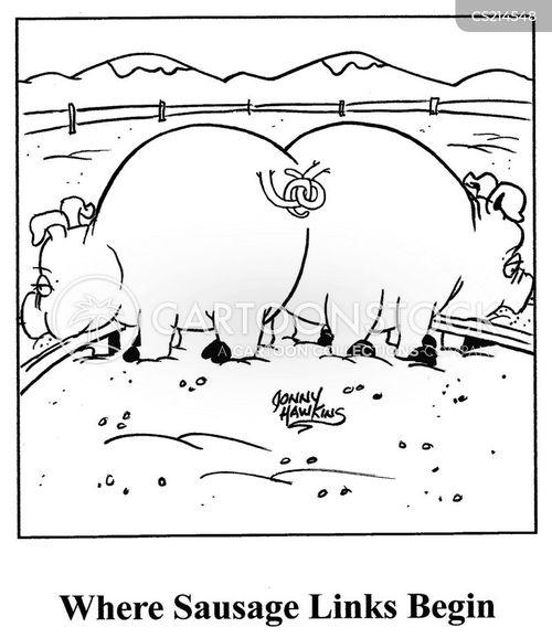 pig pens cartoon