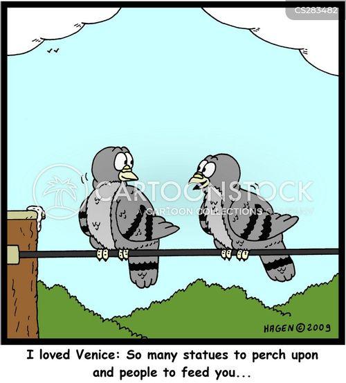feeding pigeons cartoon