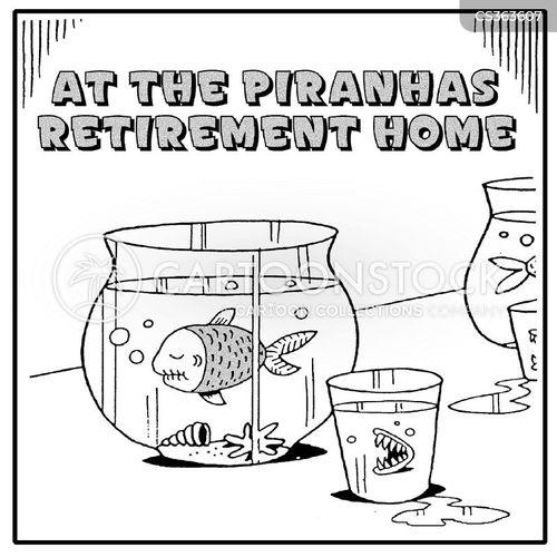 piranha fish cartoon