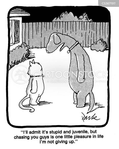 cat guys vs dog guys