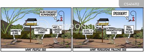 peregrine falcons cartoon