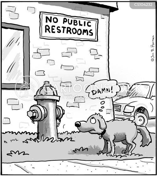 animals public toilet public restroom public bathroom dog canine