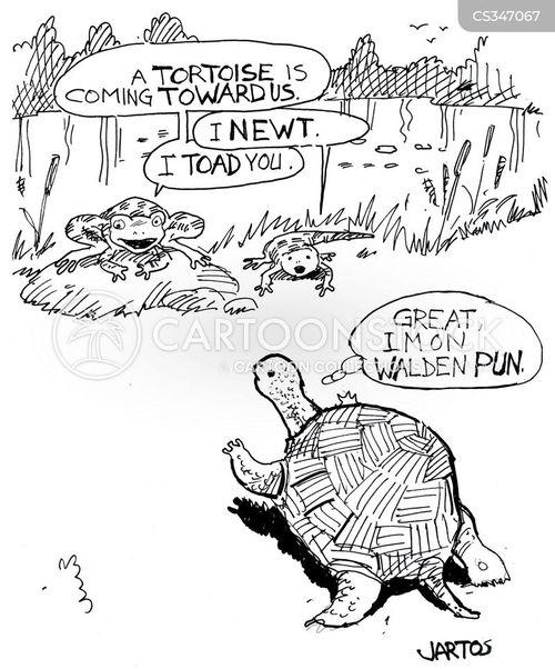 walden pond cartoon