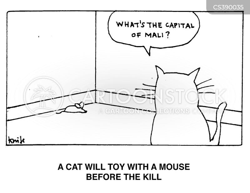 animals-quiz-trivia-cat-pet-mouse-dmc017