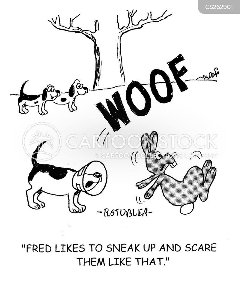 how to train a lurcher to hunt rabbits