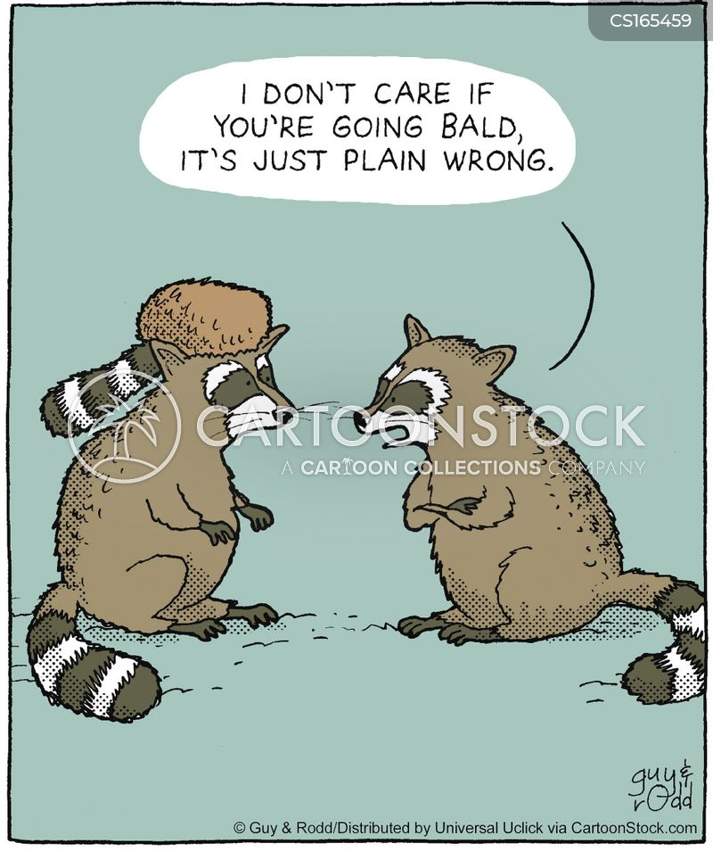 racoons cartoon