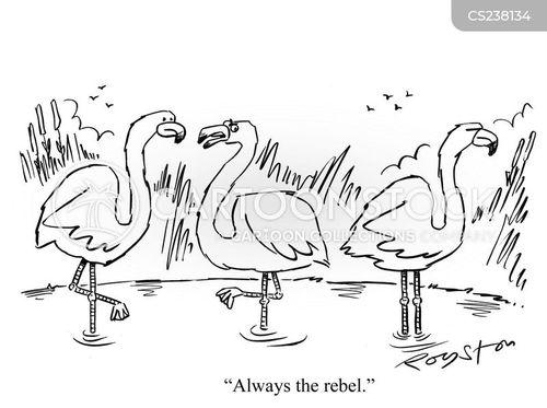 flamingoes cartoon