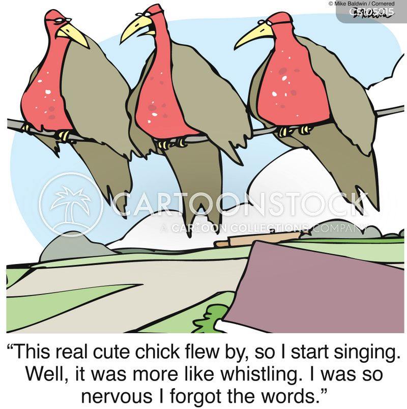 bird songs cartoon