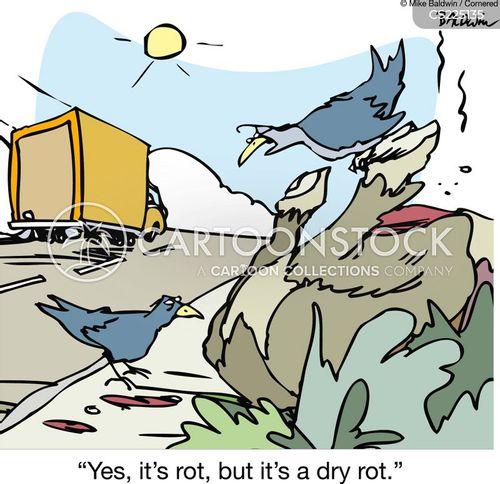 rotting cartoon
