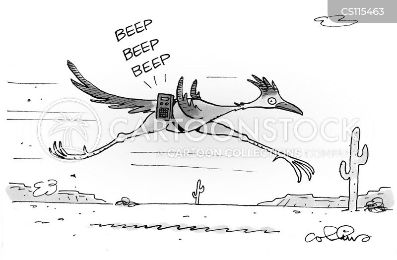 greater roadrunners cartoon