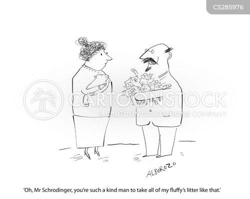 schrodinger cartoon