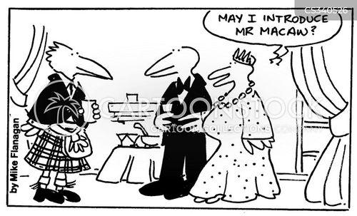 maccaw cartoon