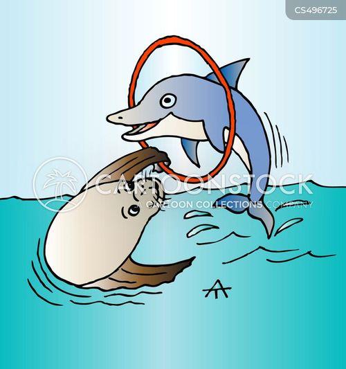 sea lion cartoon