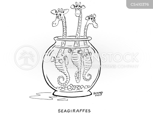seahorse cartoon