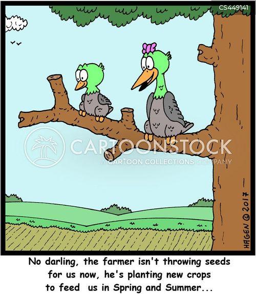 starling cartoon