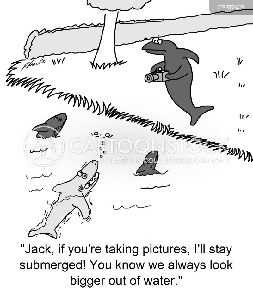 hammerhead cartoon