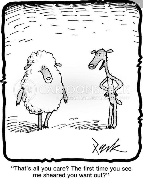 sheared cartoon