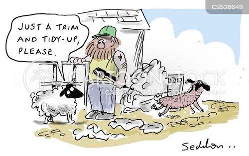 sheep shearer cartoon