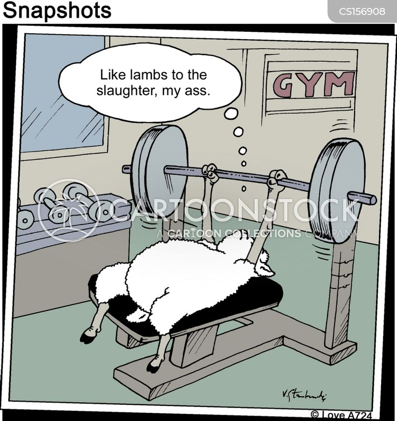[Image: animals-sheep-gymnasium-keeping_fit-exer...92_low.jpg]