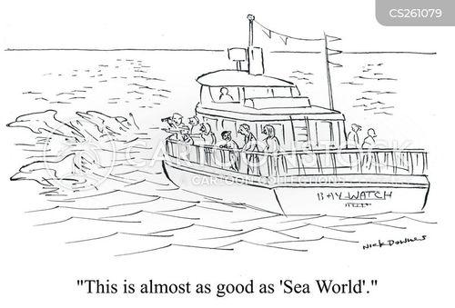 sailed cartoon