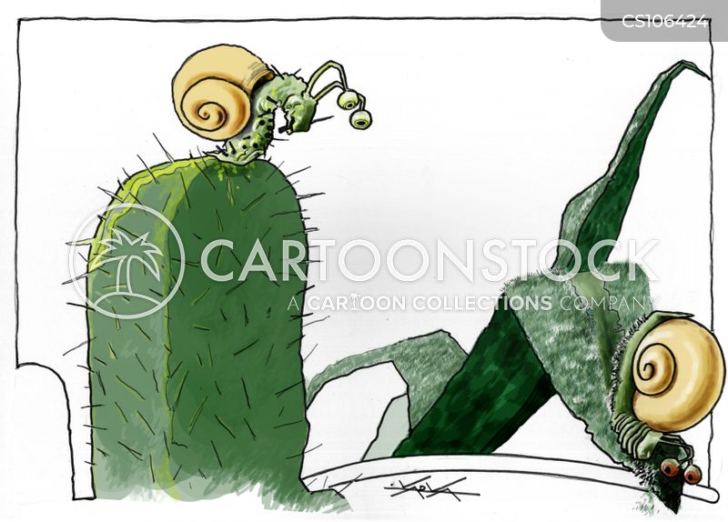 Cactuses Cartoons and Comics - funny pictures from CartoonStock
