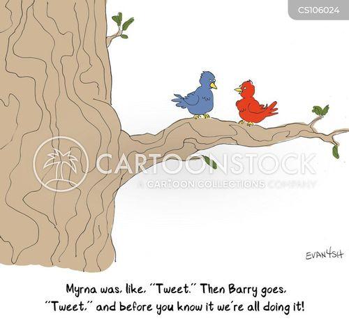 birdsongs cartoon