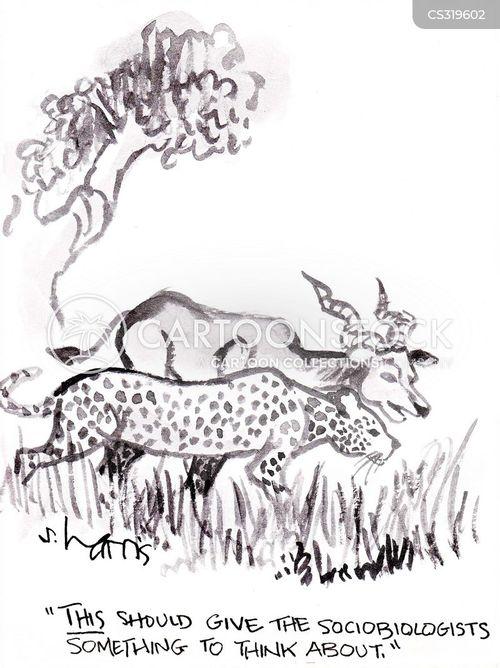 wild creatures cartoon