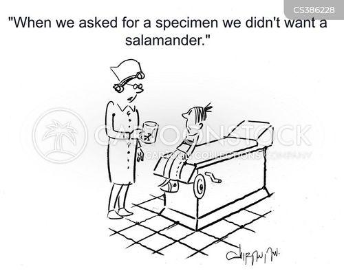 salamanders cartoon