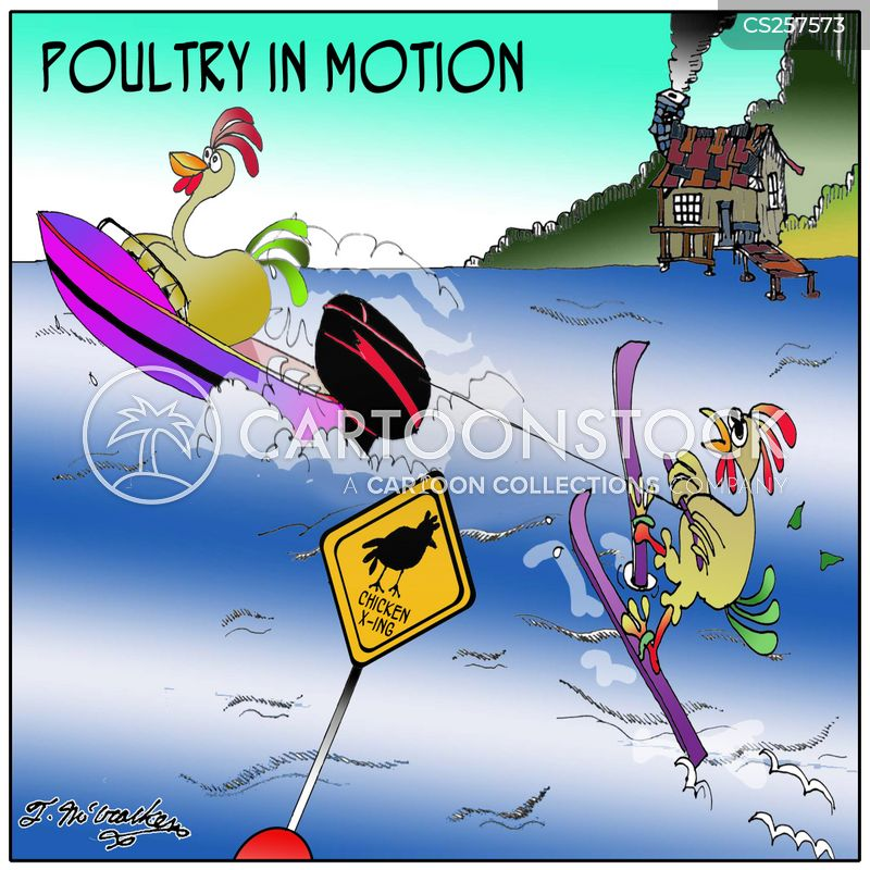 chickens poultry cartoon