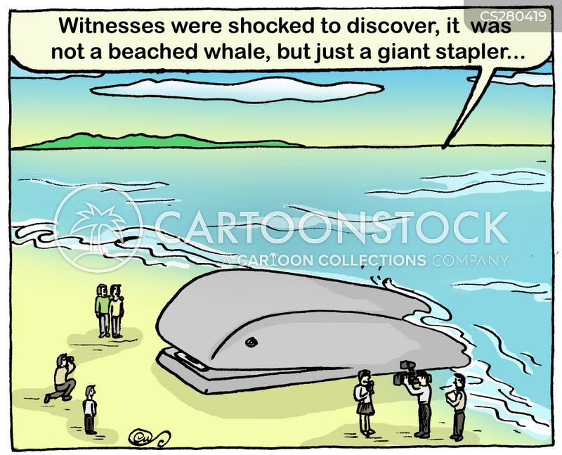 sperm whale cartoon