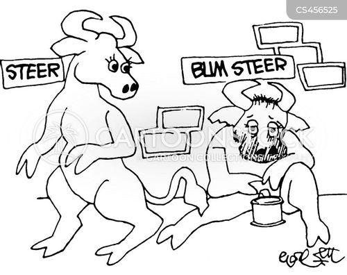 steer cartoon