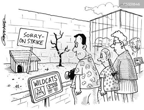 wilcat cartoon