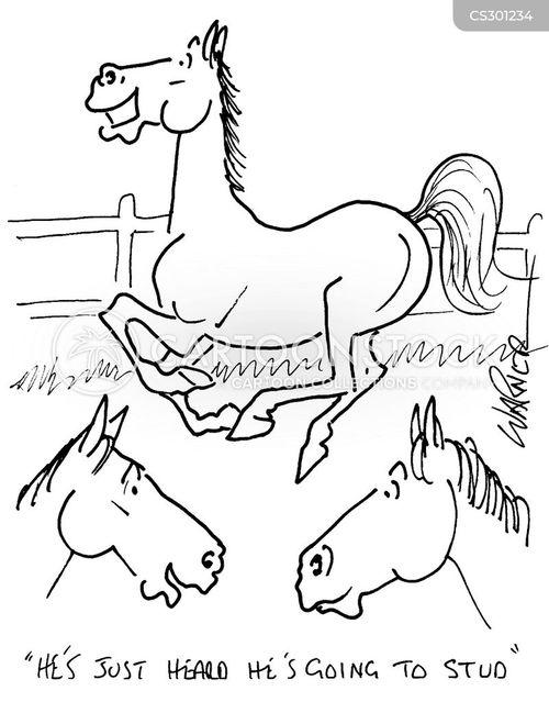 stud farm cartoon
