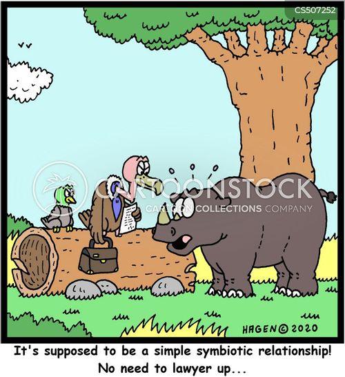oxpecker cartoon