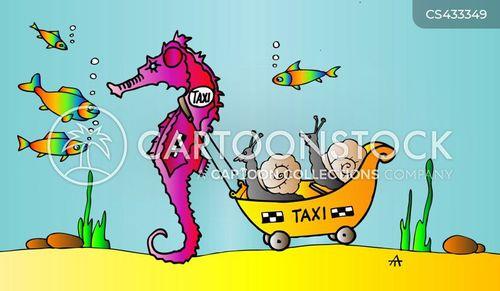 sea-horse cartoon