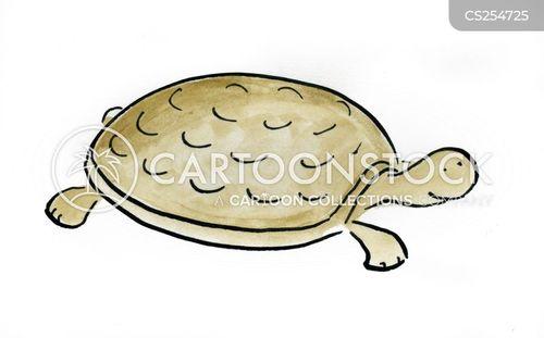 pet turtles cartoon