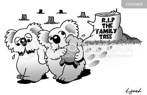 koala bears cartoon