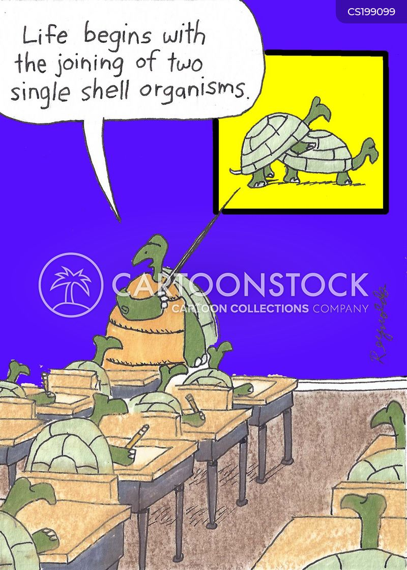 tortoisesshells cartoon