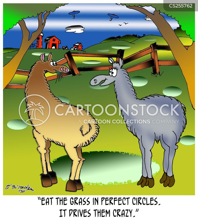 llamas cartoon