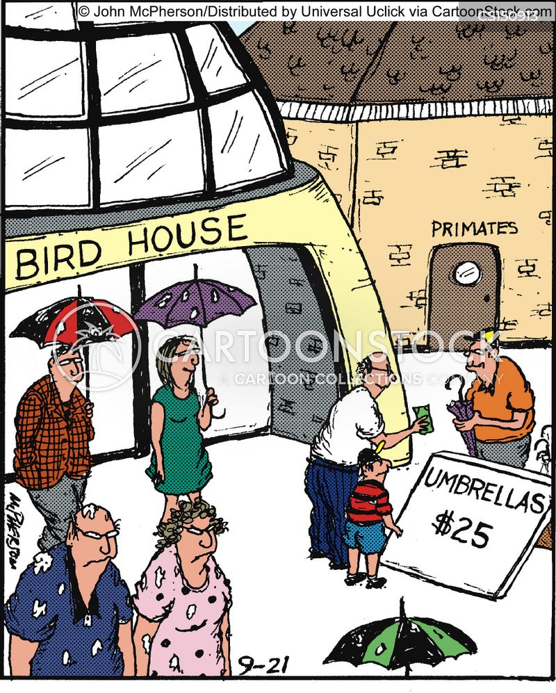 bird droppings cartoon