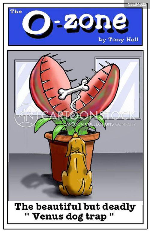 venus fly traps cartoon