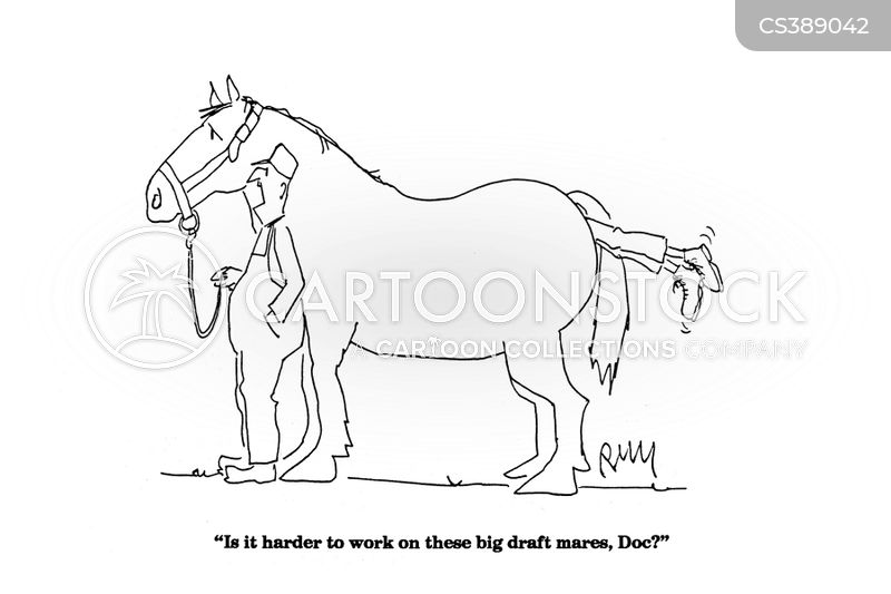 Horse Vet Cartoon Horse Palpations Cartoon 2 of