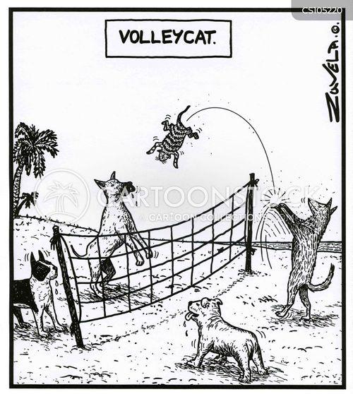 volleyballs cartoon