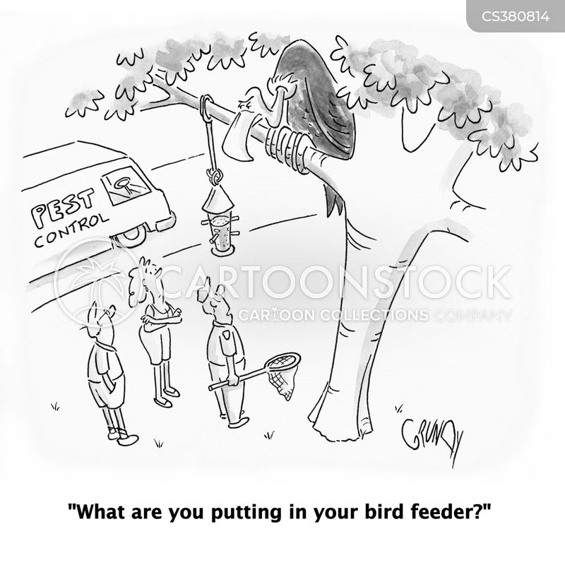 bird feeding cartoon