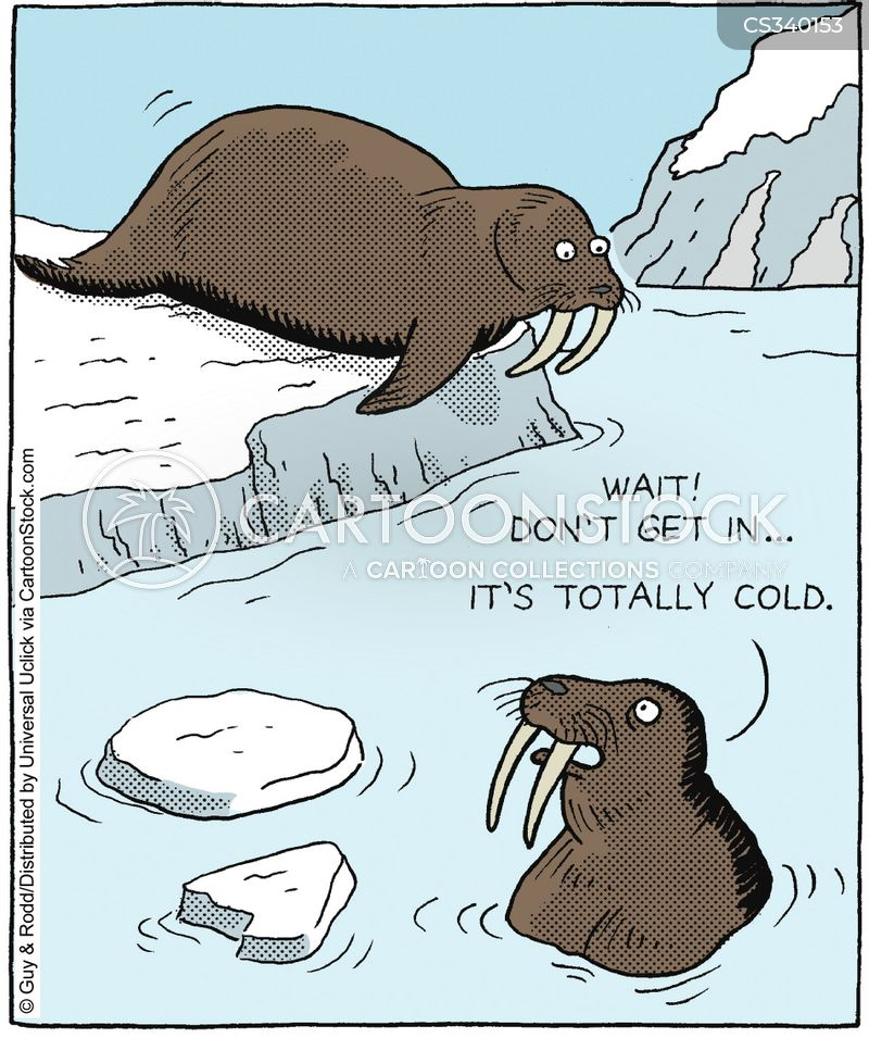 walrus cartoon
