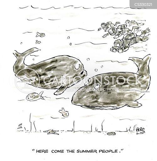 sea mammal cartoon