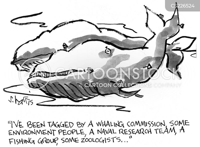 naval research cartoon