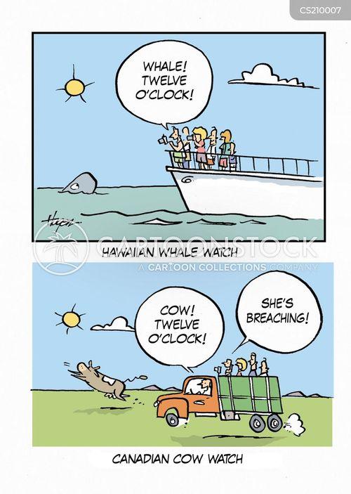 whale watching cartoon