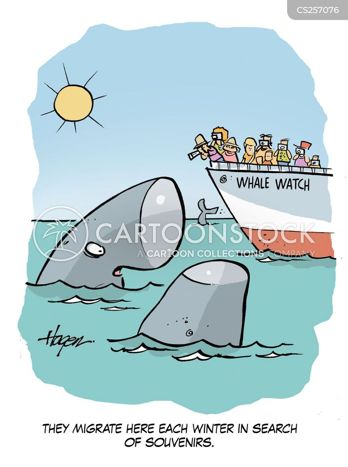 whale watches cartoon